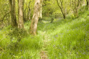 Many paths lead through Coombe woodlands.