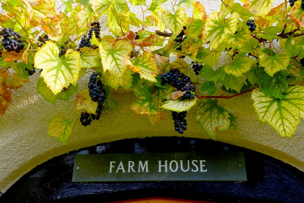 Natures Harvest – Autumn at Middle Coombe Farm