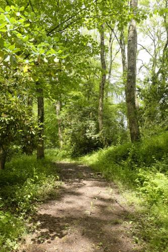 Middle Coombe Farm woods